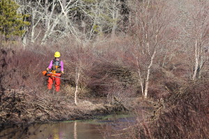 Americorps Cape Cod member Libby Fifer, of Newtown Square, Pennsylvania, works along the Quashnet River.
