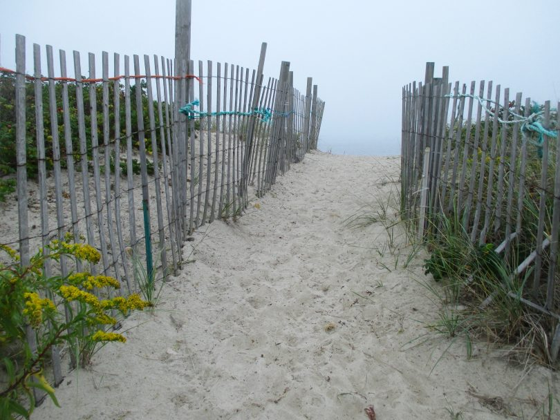 Foggy Path To The Sea