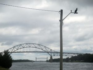 A cormorant strikes a pose on a light pole along the Cape Cod Canal with the Bourne Bridge and the Railroad Bridge in the background.