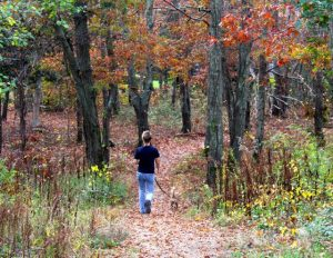 A staffer walks a dog in the woods that are part of the MSPCA's Centerville campus. The wooded area will remain as part of the new plans.